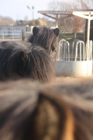 Ponyplüsch